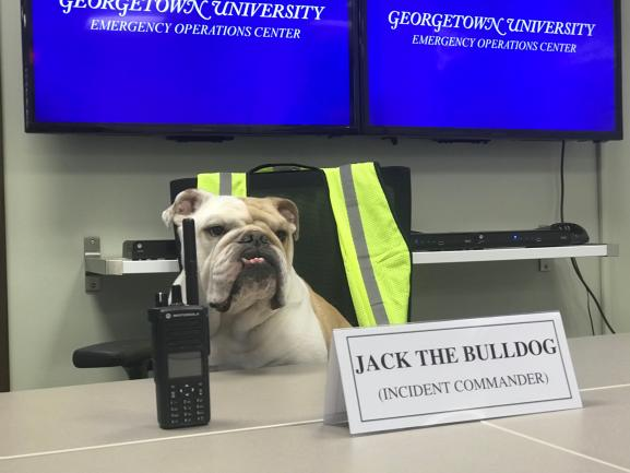 Office of Emergency Management with Jack the Bulldog as Incident Commander